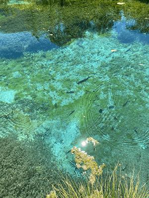 eau turquoise zelenci sloenie