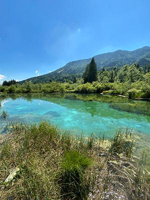 parc naturel zelenci slovenie