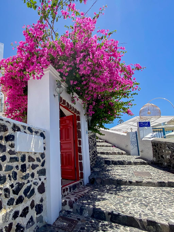 Bougainvillier rose à l'entrée d'une maison sur l'île de Santorin