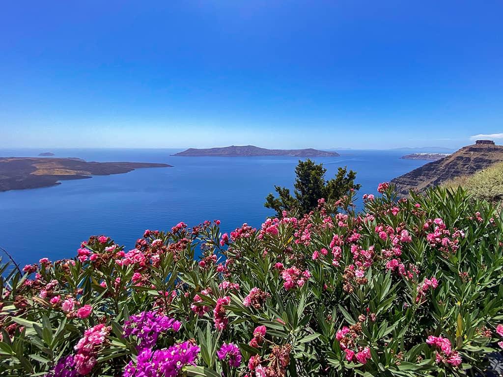 Des fleurs roses et la mer en arrière plan sur l'île de Santorin